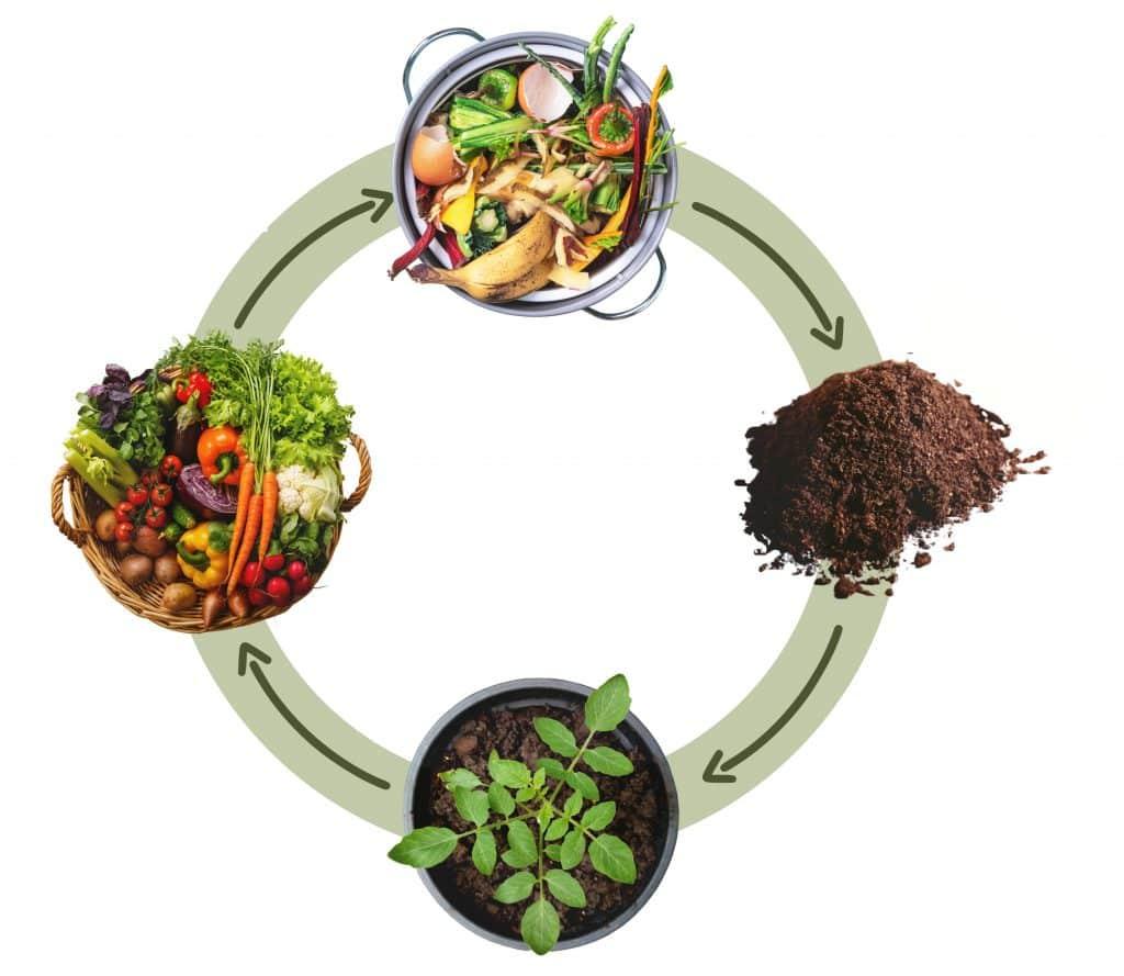 Le cycle de vie du lombricompostage commence avec vos biodéchets.